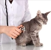 Ветеринарные клиники в Куеде